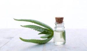 Gesund bleiben leicht gemacht - mit Aloe Vera