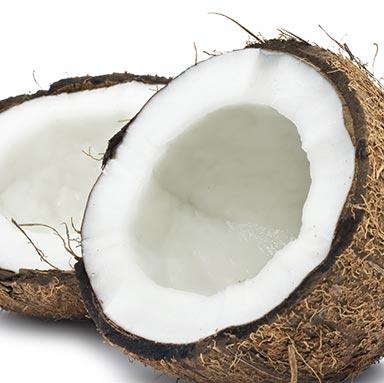 Shapeline - Kokos groß